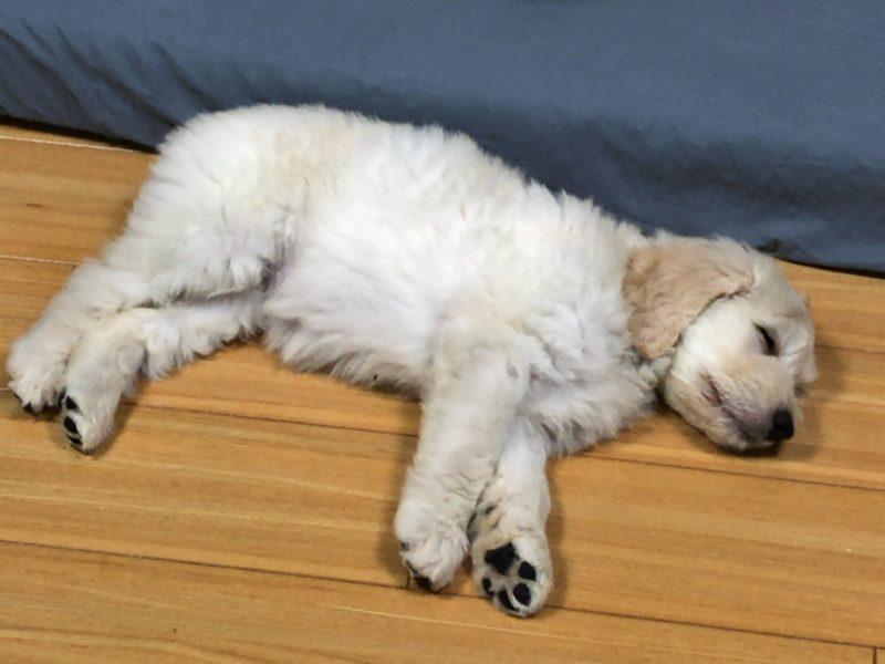 sleeping moka