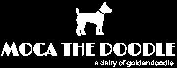 MOCA THE DOODLE